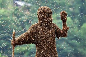 Wasps EVERYWHERE 300x200 I Am a Weenie
